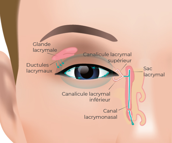 Schéma de l'œil - Larmotec